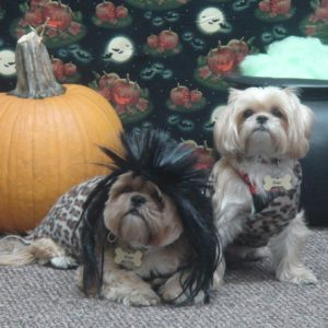 Doggie Costume Day